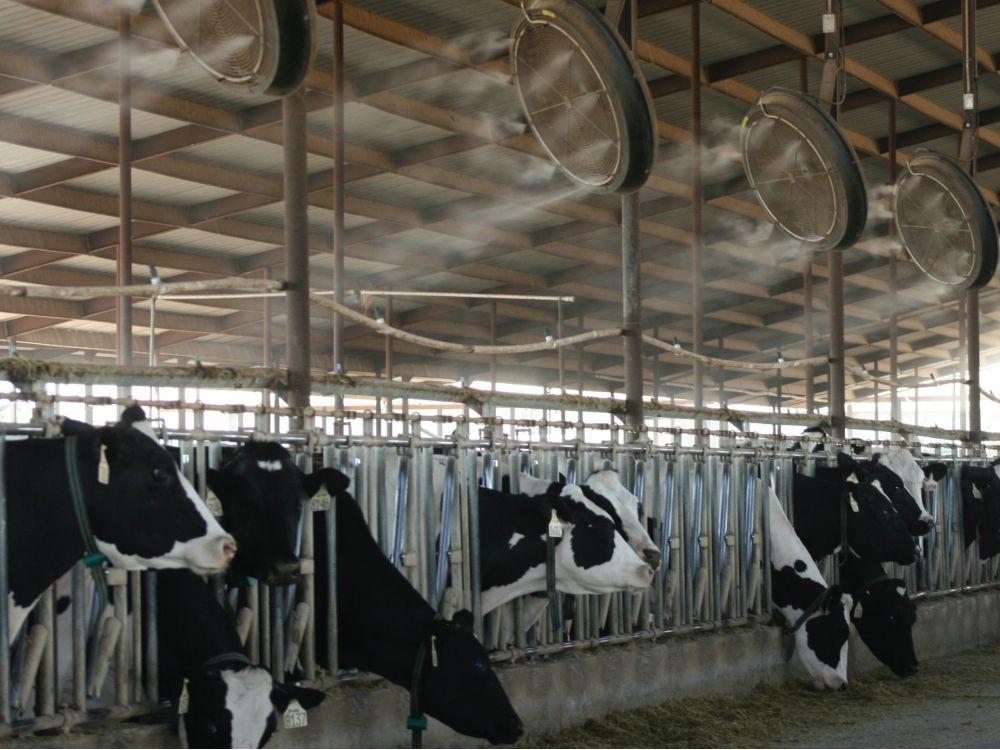 Goveda i krave